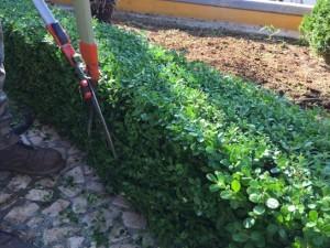 manutenzione_giardini_lecce