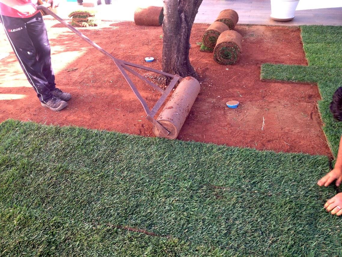 Realizzazione manutenzione e cura del verde for Prato erboso a rotoli