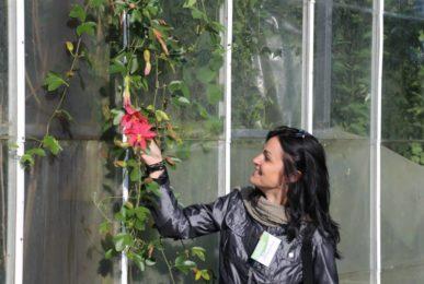 Stefania Mattiuzzo Londra Collezione Nazionale John Vanderplank passiflora rampicante centrovivai garden center stefania mattiuzzo ricerca