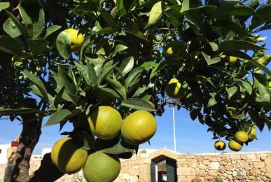 curare gli agrumi in modo facile ed economico