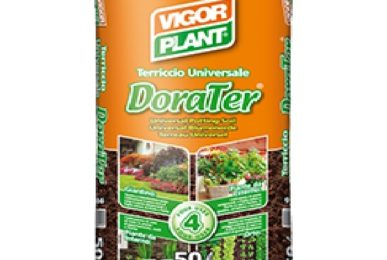 dorater-vigorplant